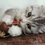 猫臭い部屋の消臭対策は?室内猫の体臭と部屋のにおいの消臭方法